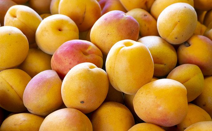 杏の実の色