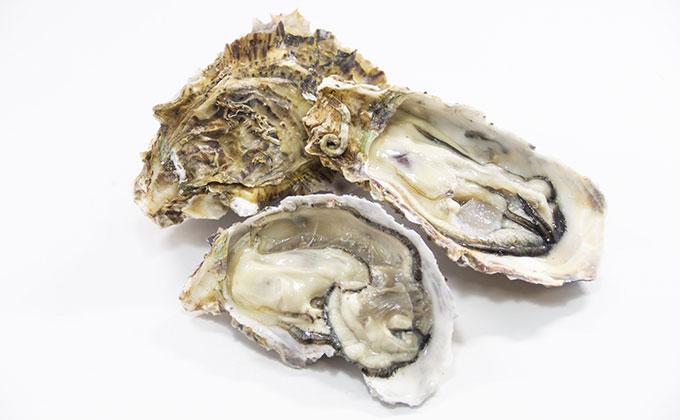 牡蠣の貝殻の色