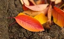 秋の色のイメージ