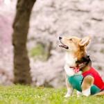 春の色のイメージ
