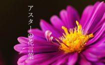 色で変わるアスターの花言葉