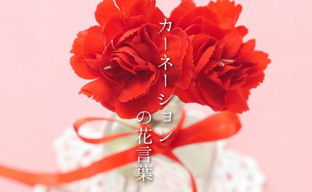 色で変わる「カーネーション」の花言葉