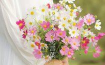 色で変わる「秋桜/コスモス」の花言葉