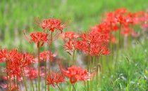 秋の花の色と花言葉