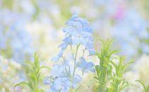 青色の花の花言葉