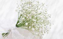 白い霞草(カスミソウ)の花言葉