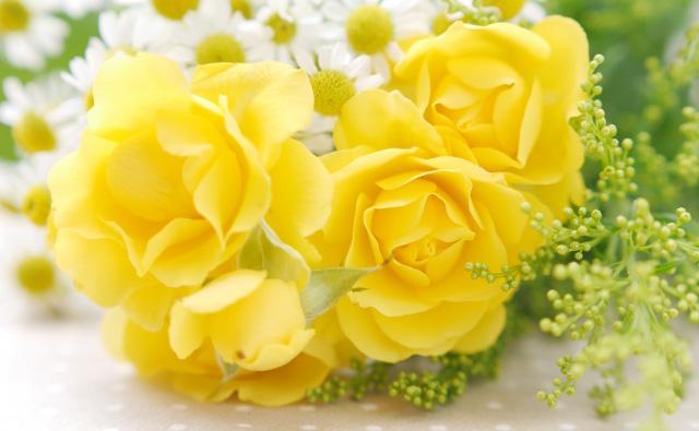 の 花 バラ 言葉 黄色い