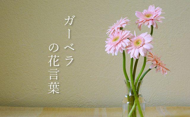 色で変わるガーベラの花言葉