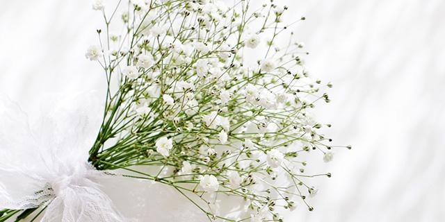白色のカスミソウの花言葉