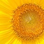 黄色のイメージ