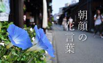 色で変わる朝顔の花言葉