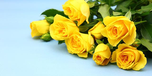 黄色いバラの花言葉