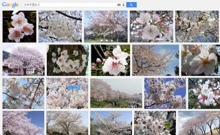「ソメイヨシノ」の画像検索