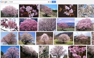 「大山桜」の画像検索