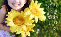 色で変わるひまわりの花言葉