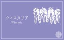 ウィスタリア wistaria